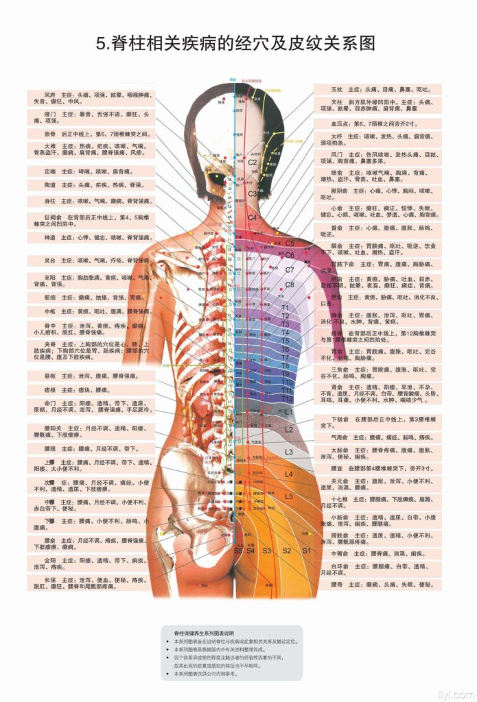 spine and disease chart