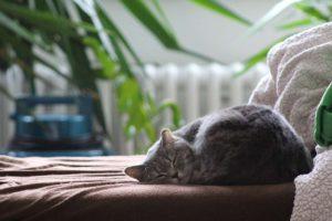 relaxing status